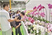 漳浦种植食用药用花卉超万亩